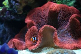 sea invertebrate carpet anemone 14 36